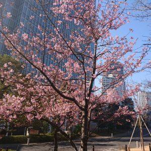 赤坂にも春🌸